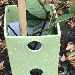 Plastic-free tree-guards