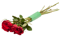 Protective rose-stem wraps