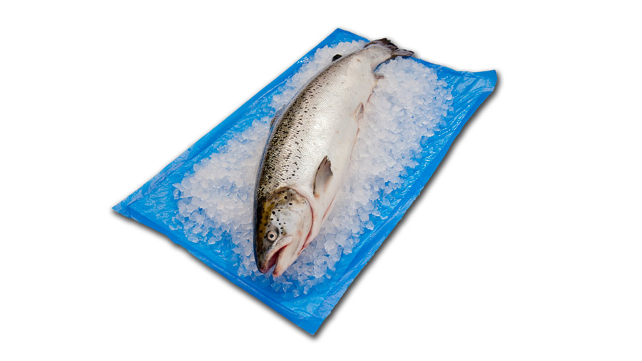 Absorbent fish pads and mats