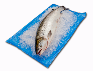 Absorbent fish crate liners